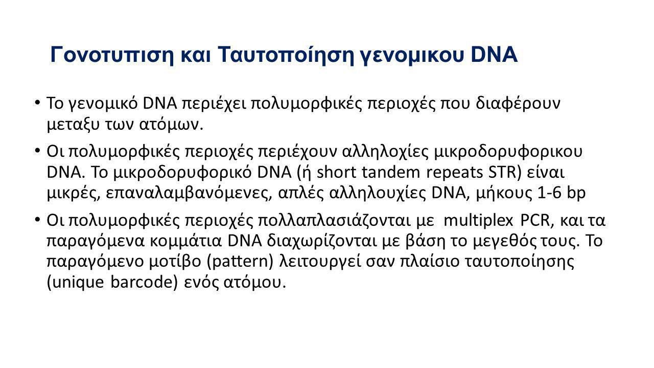 Γονοτυπιση και Ταυτοποίηση γενομικου DNA • Το γενομικό DNA περιέχει πολυμορφικές περιοχές που διαφέρουν μεταξυ των ατόμων.