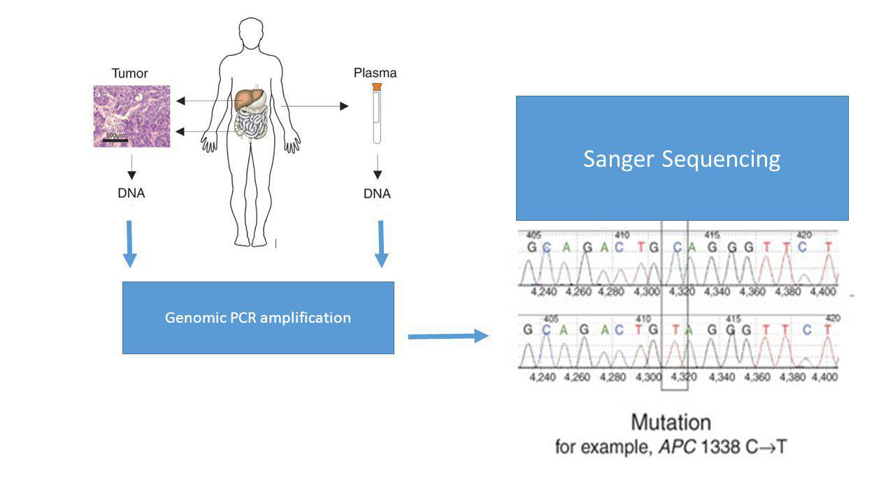 Genomic PCR amplification Sanger Sequencing