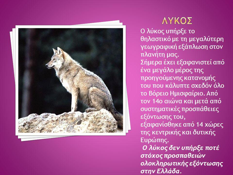 Ο λύκος υπήρξε το θηλαστικό με τη μεγαλύτερη γεωγραφική εξάπλωση στον πλανήτη μας. Σήμερα έχει εξαφανιστεί από ένα μεγάλο μέρος της προηγούμενης καταν