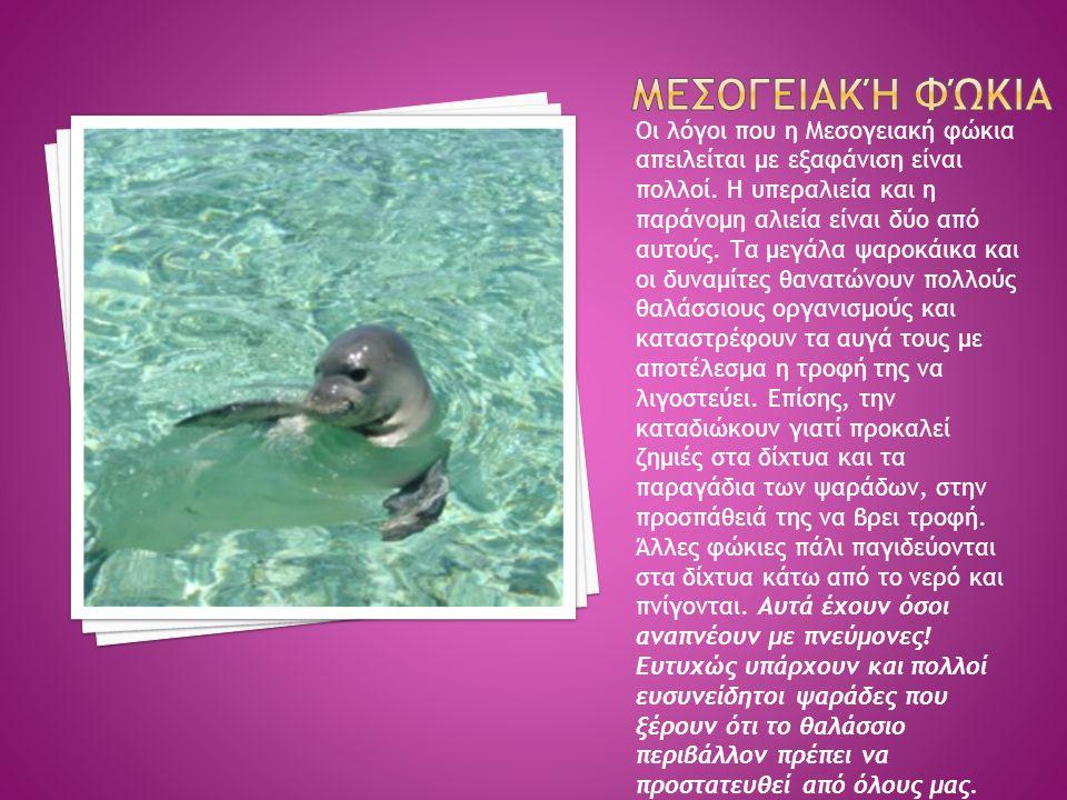 Οι λόγοι που η Μεσογειακή φώκια απειλείται με εξαφάνιση είναι πολλοί. Η υπεραλιεία και η παράνομη αλιεία είναι δύο από αυτούς. Τα μεγάλα ψαροκάικα και