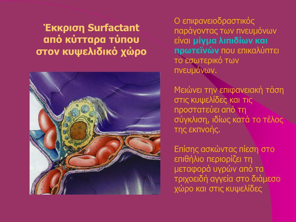 Έκκριση Surfactant από κύτταρα τύπου στον κυψελιδικό χώρο Ο επιφανειoδραστικός παράγοντας των πνευμόνων είναι μίγμα λιπιδίων και πρωτεϊνών που επικαλύπτει το εσωτερικό των πνευμόνων.