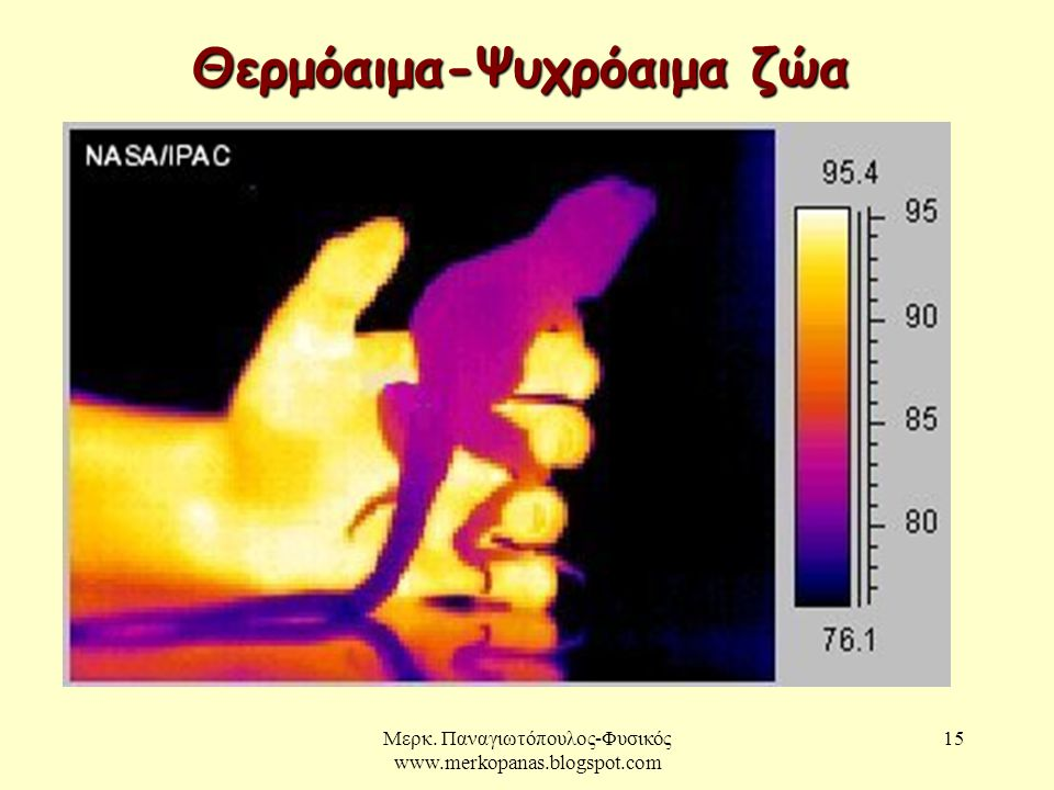 Μερκ. Παναγιωτόπουλος-Φυσικός www.merkopanas.blogspot.com 15 Θερμόαιμα-Ψυχρόαιμα ζώα