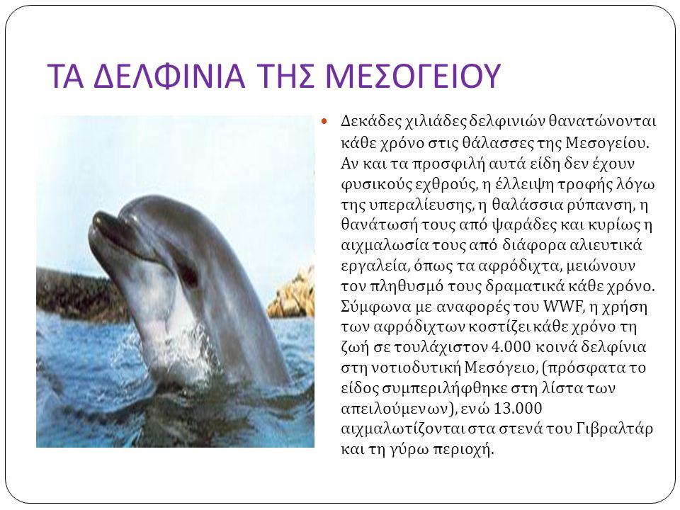 ΤΑ ΔΕΛΦΙΝΙΑ ΤΗΣ ΜΕΣΟΓΕΙΟΥ  Δεκάδες χιλιάδες δελφινιών θανατώνονται κάθε χρόνο στις θάλασσες της Μεσογείου.