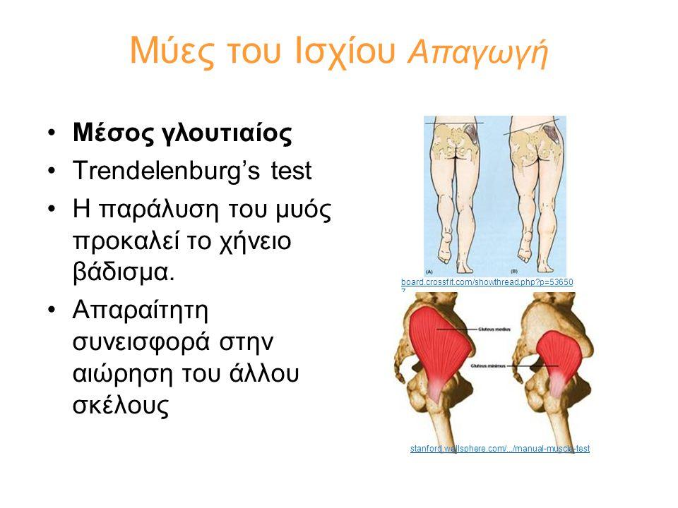 Μύες του Ισχίου Απαγωγή •Μέσος γλουτιαίος •Trendelenburg's test •Η παράλυση του μυός προκαλεί το χήνειο βάδισμα. •Απαραίτητη συνεισφορά στην αιώρηση τ