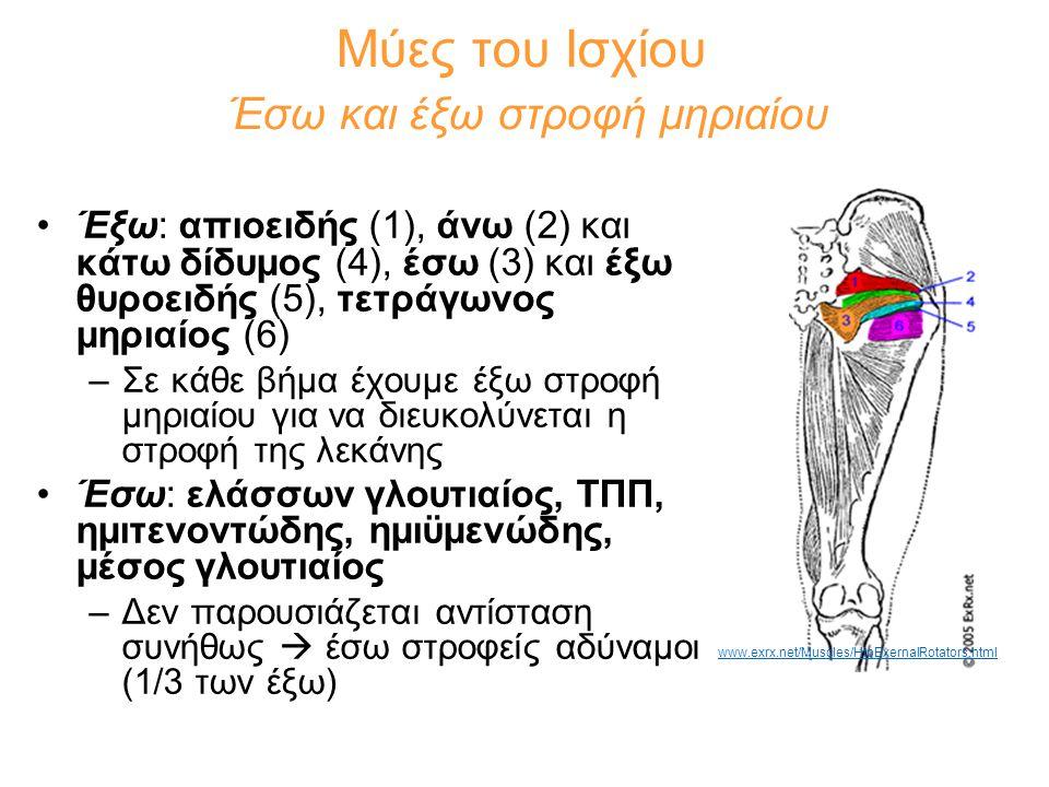 Μύες του Ισχίου Έσω και έξω στροφή μηριαίου •Έξω: απιοειδής (1), άνω (2) και κάτω δίδυμος (4), έσω (3) και έξω θυροειδής (5), τετράγωνος μηριαίος (6)