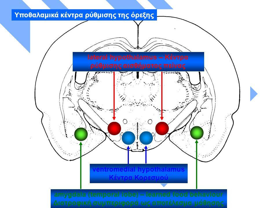 Hypothalamic appetite centres lateral hypothalamus – Κέντρα ρύθμισης αισθήματος πείνας ventromedial hypothalamus Κέντρα Κορεσμού amygdala (temporal lobe) – learned food behaviour Διατροφική συμπεριφορά ως αποτέλεσμα μάθησης Υποθαλαμικά κέντρα ρύθμισης της όρεξης