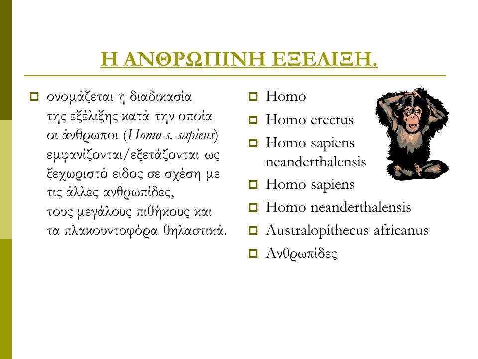 Η ΑΝΘΡΩΠΙΝΗ ΕΞΕΛΙΞΗ.  ονομάζεται η διαδικασία της εξέλιξης κατά την οποία οι άνθρωποι (Homo s. sapiens) εμφανίζονται/εξετάζονται ως ξεχωριστό είδος σ