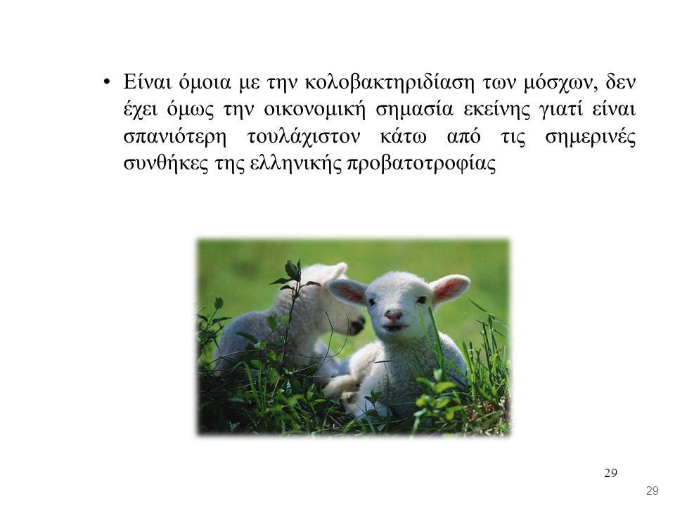 29 •Είναι όμοια με την κολοβακτηριδίαση των μόσχων, δεν έχει όμως την οικονομική σημασία εκείνης γιατί είναι σπανιότερη τουλάχιστον κάτω από τις σημερινές συνθήκες της ελληνικής προβατοτροφίας 29