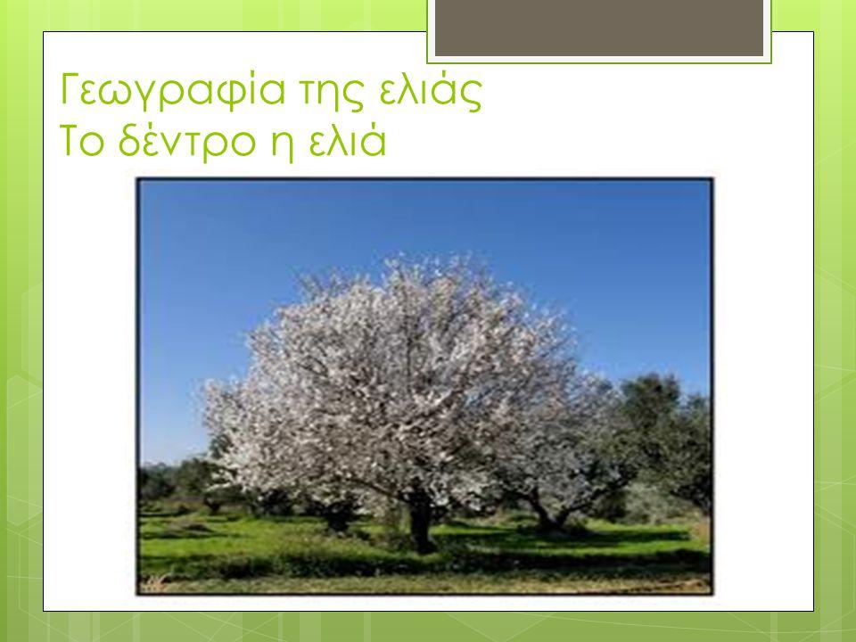 Γεωγραφία της ελιάς  Η ελιά είναι γένος καρποφόρων δένδρων της οικογένειας των Ελαιοειδών,το οποίο συναντάται πολύ συχνά και στην Ελλάδα.