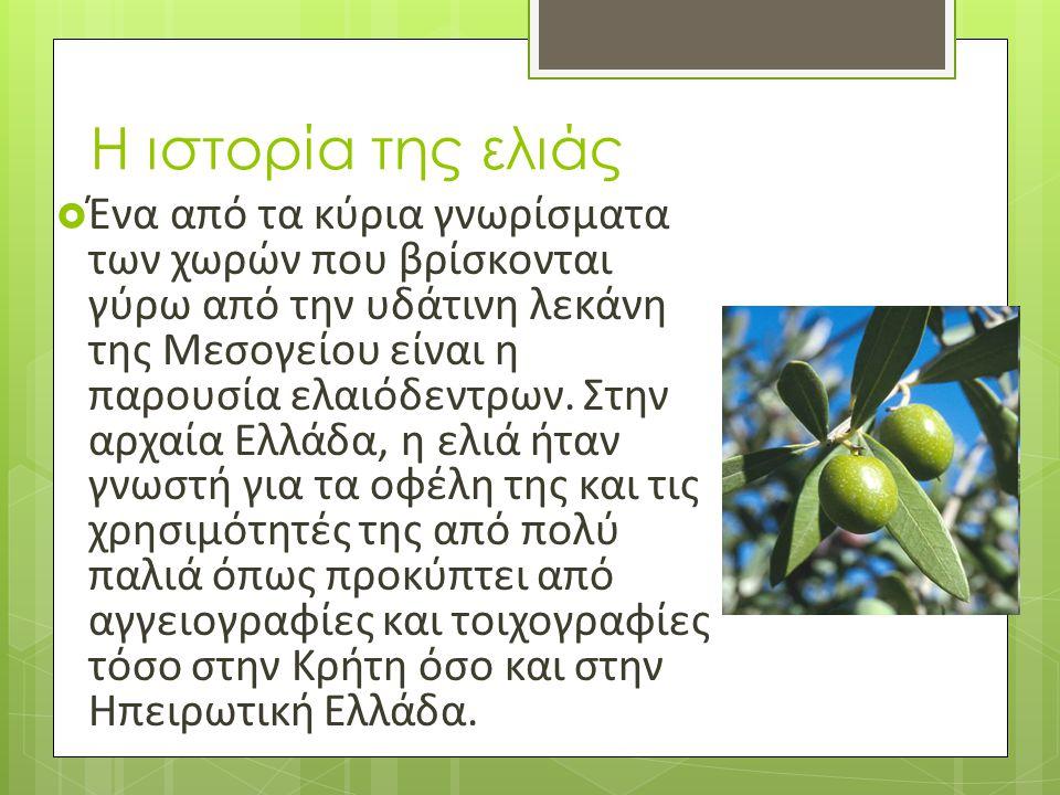 Η ιστορία της ελιάς  Ένα από τα κύρια γνωρίσματα των χωρών που βρίσκονται γύρω από την υδάτινη λεκάνη της Μεσογείου είναι η παρουσία ελαιόδεντρων. Στ