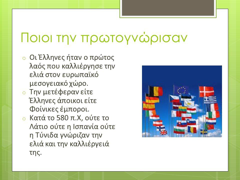 Ποιοι την πρωτογνώρισαν o Οι Έλληνες ήταν ο πρώτος λαός που καλλιέργησε την ελιά στον ευρωπαϊκό μεσογειακό χώρο. o Την μετέφεραν είτε Έλληνες άποικοι