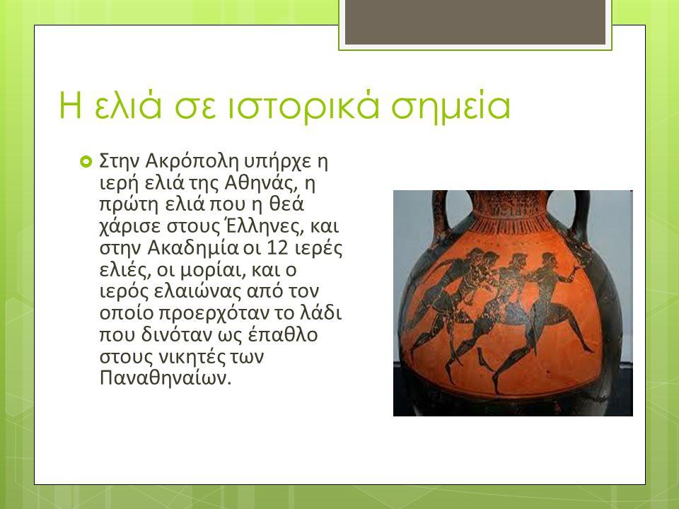 Η ελιά σε ιστορικά σημεία  Στην Ακρόπολη υπήρχε η ιερή ελιά της Αθηνάς, η πρώτη ελιά που η θεά χάρισε στους Έλληνες, και στην Ακαδημία οι 12 ιερές ελ
