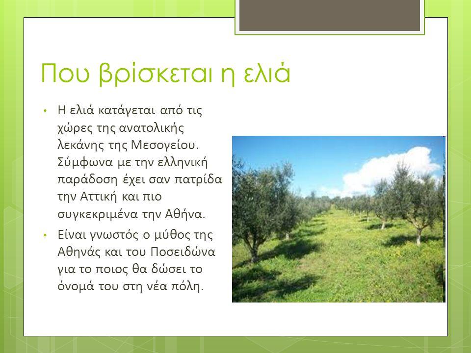 Που βρίσκεται η ελιά • Η ελιά κατάγεται από τις χώρες της ανατολικής λεκάνης της Μεσογείου. Σύμφωνα με την ελληνική παράδοση έχει σαν πατρίδα την Αττι