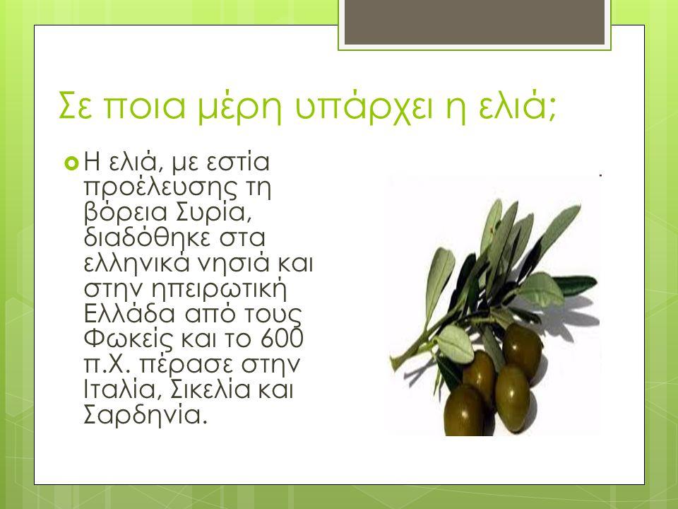 Σε ποια μέρη υπάρχει η ελιά;  Η ελιά, με εστία προέλευσης τη βόρεια Συρία, διαδόθηκε στα ελληνικά νησιά και στην ηπειρωτική Ελλάδα από τους Φωκείς κα