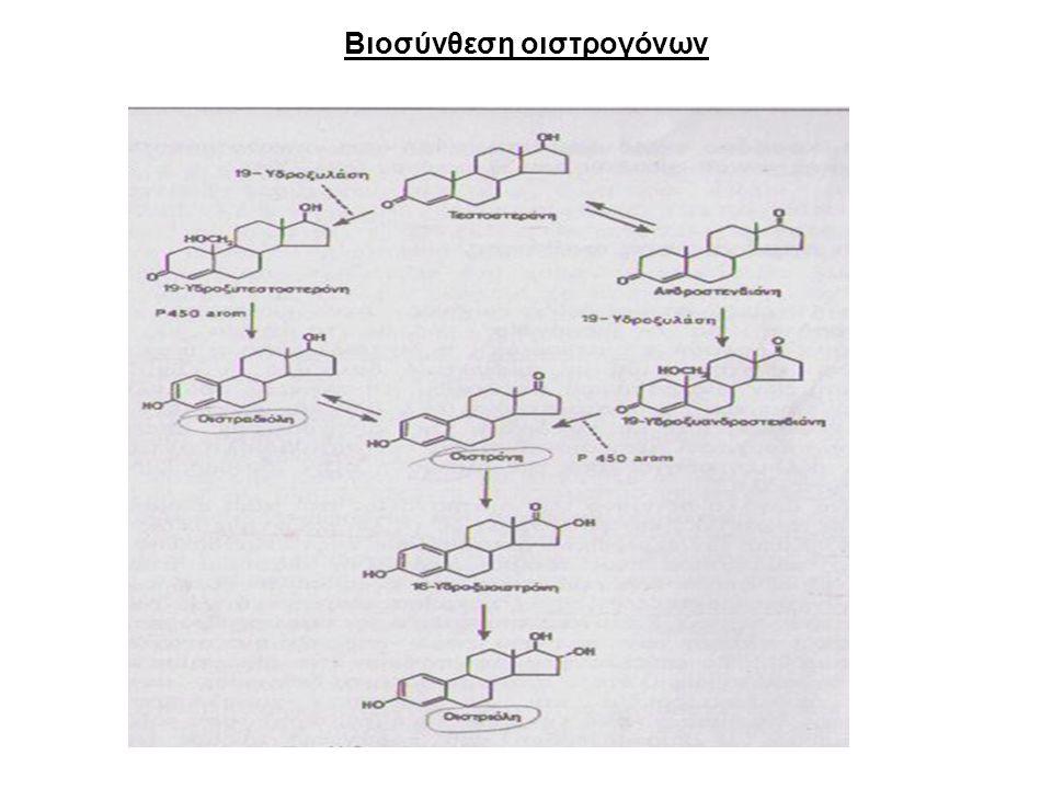 Βιοσύνθεση οιστρογόνων