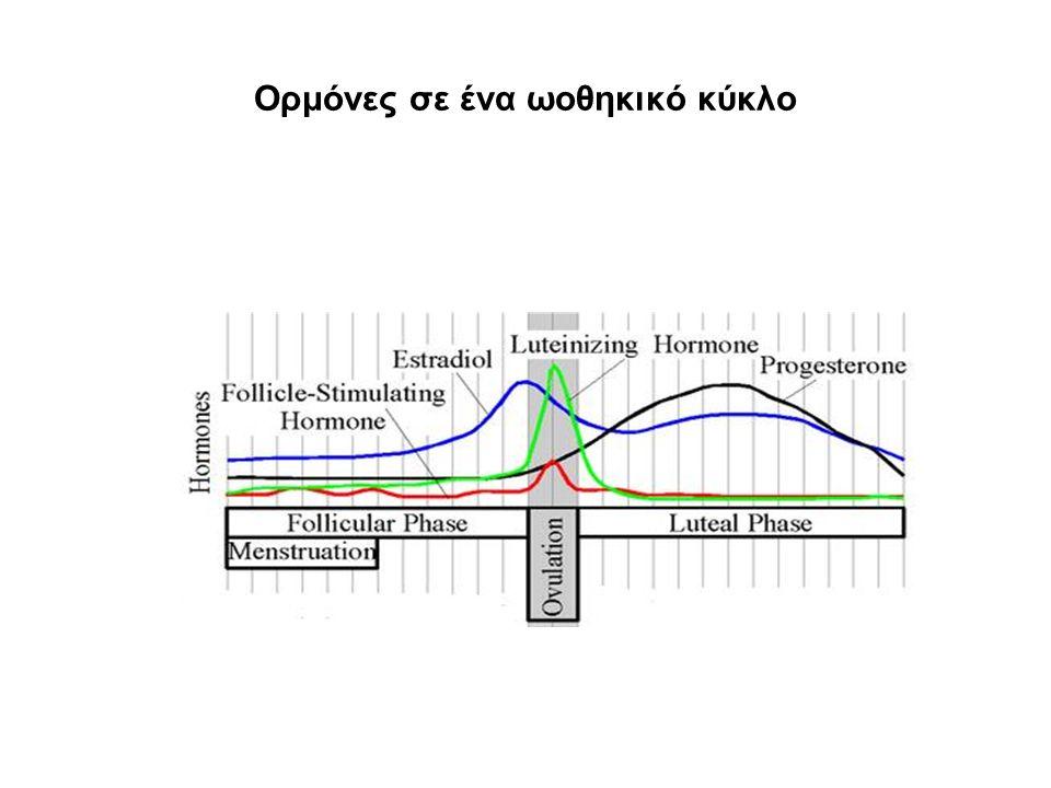 Ορμόνες σε ένα ωοθηκικό κύκλο