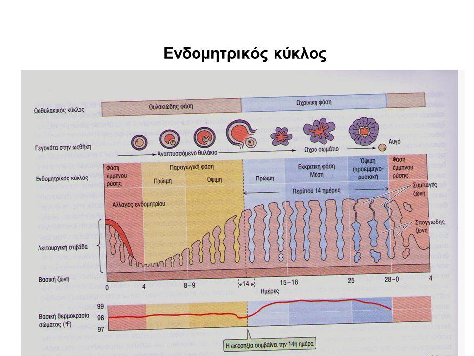 Ενδομητρικός κύκλος