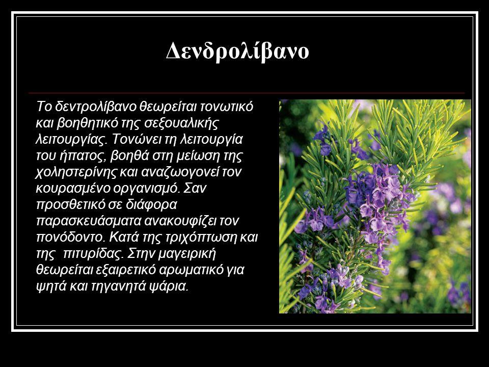 Δενδρολίβανο Το δεντρολίβανο θεωρείται τονωτικό και βοηθητικό της σεξουαλικής λειτουργίας. Τονώνει τη λειτουργία του ήπατος, βοηθά στη μείωση της χολη
