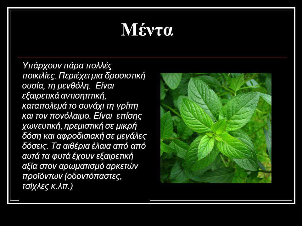 Μέντα Υπάρχουν πάρα πολλές ποικιλίες. Περιέχει μια δροσιστική ουσία, τη μενθόλη. Είναι εξαιρετικά αντισηπτική, καταπολεμά το συνάχι τη γρίπη και τον π