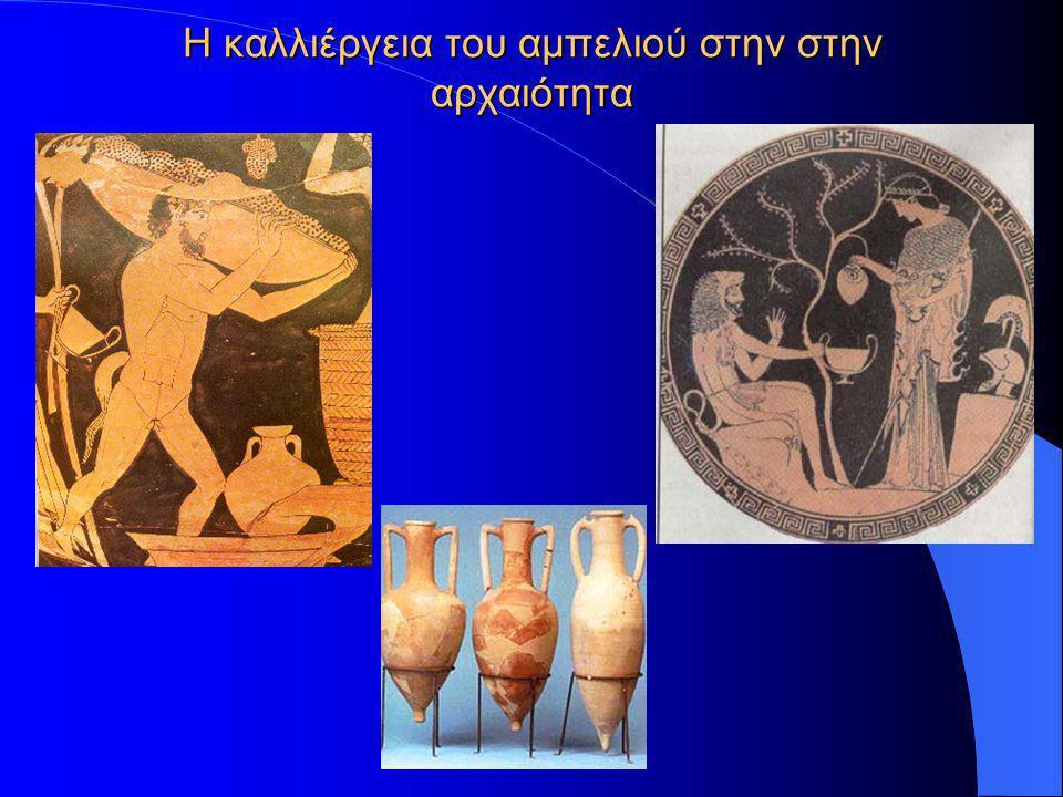 Η καλλιέργεια του αμπελιού στην στην αρχαιότητα