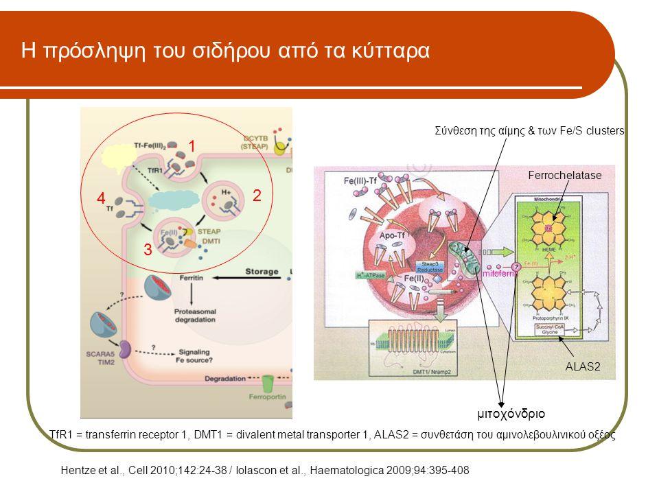 Η πρόσληψη του σιδήρου από τα κύτταρα ALAS2 Ferrochelatase μιτοχόνδριο mitoferrin Σύνθεση της αίμης & των Fe/S clusters TfR1 = transferrin receptor 1,