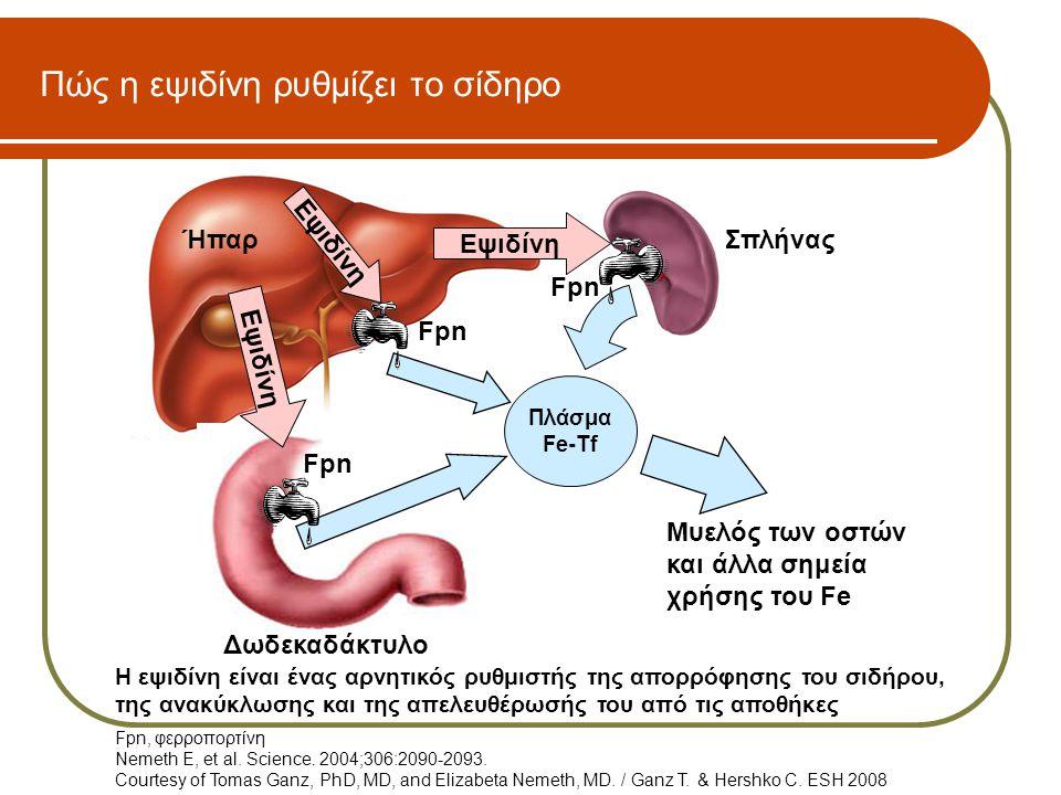 ΣπλήναςΉπαρ Δωδεκαδάκτυλο Εψιδίνη Fpn Πλάσμα Fe-Tf Πώς η εψιδίνη ρυθμίζει το σίδηρο Μυελός των οστών και άλλα σημεία χρήσης του Fe Fpn, φερροπορτίνη N