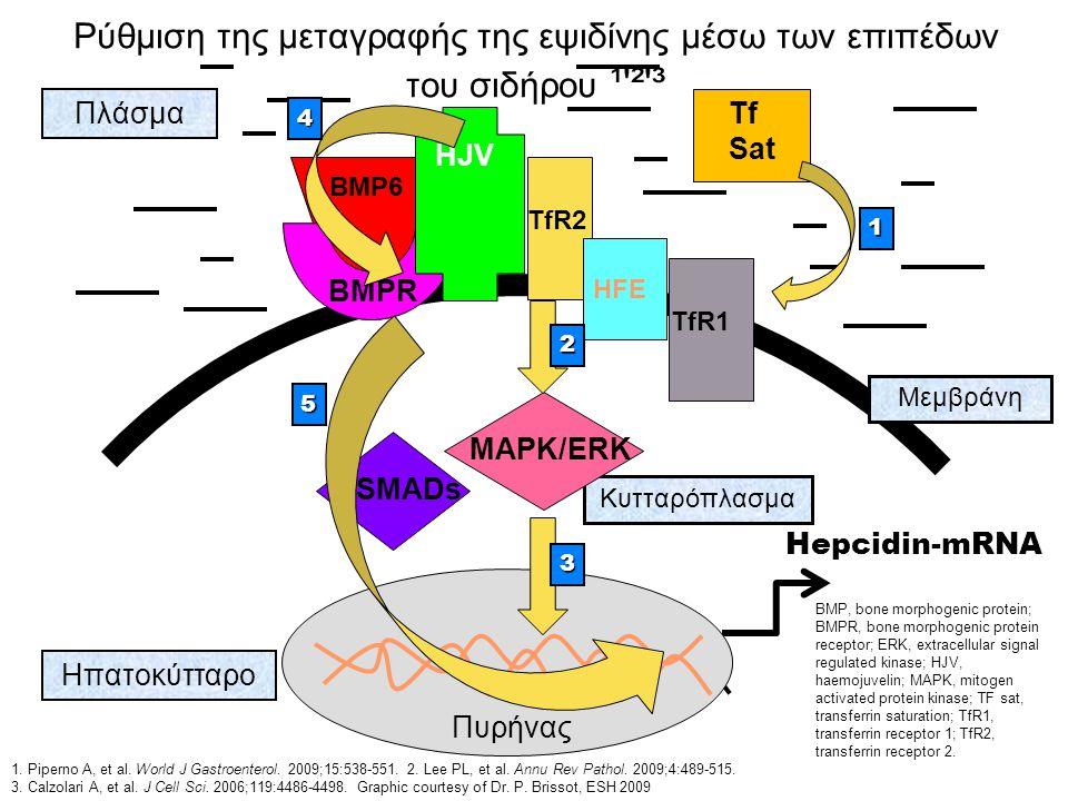 Ρύθμιση της μεταγραφής της εψιδίνης μέσω των επιπέδων του σιδήρου ¹'²'³ BMP6 BMPR SMADs HJV TfR2TfR1 HFE Tf Sat Πλάσμα Ηπατοκύτταρο Πυρήνας Μεμβράνη Κ
