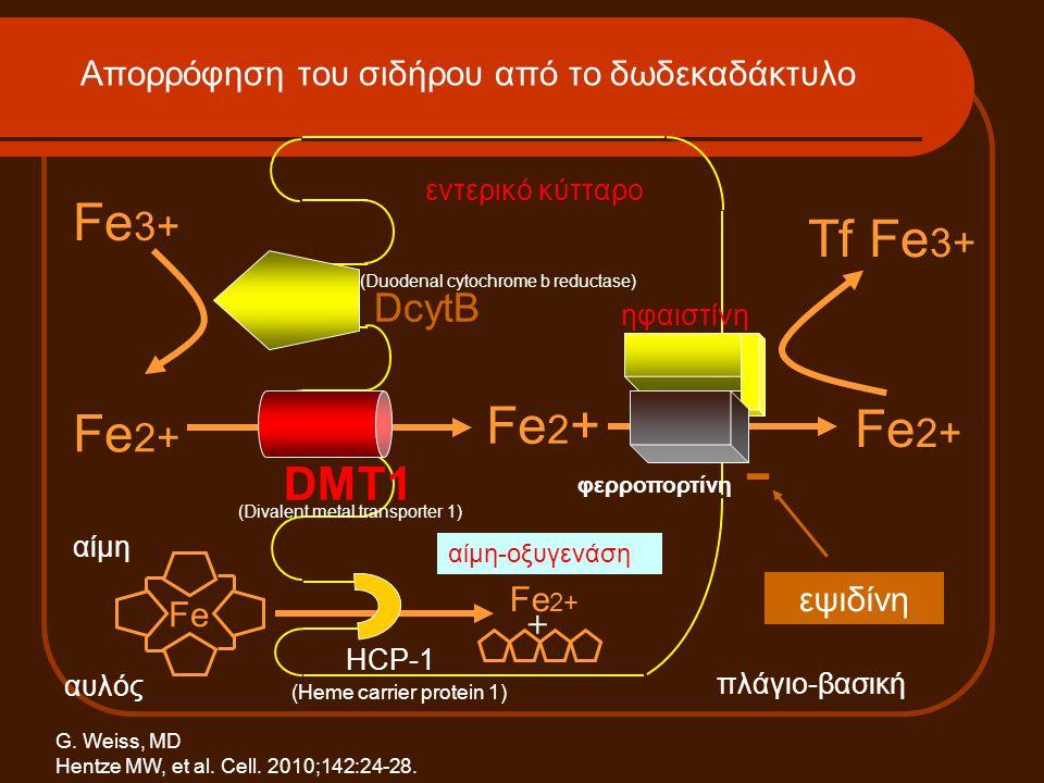 Στάδια σιδηροπενίας ΠαράμετροςΜείωση των αποθηκών Fe (reduced iron stores) Λανθάνουσα σιδηροπενία (depletion of iron stores) Σιδηροπενική αναιμία Αιμοσφαιρίνηφυσιολογική ελαττωμένη MCV / MCHφυσιολογικά ελαττωμένα Σίδηρος ορούφυσιολογικόςελαττωμένος TIBCφυσιολογικήαυξημένη Κορεσμός Tfφυσιολογικόςελαττωμένος Φερριτίνηελαττωμένη Σίδηρος μυελούελαττωμένοςαπουσιάζει Fe, σίδηρος / MCH, mean corpuscular haemoglobin / MCV, mean corpuscular volume / TIBC, total iron binding capacity.