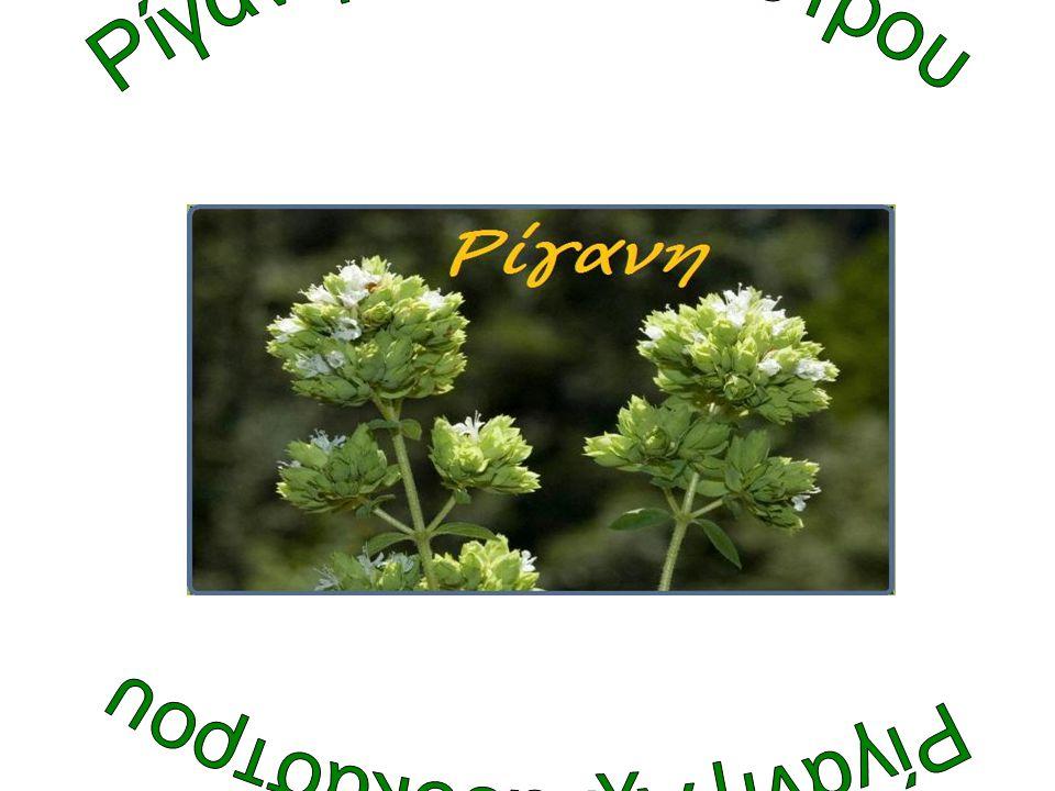 Διάθεση στην αγορά •Πρώτη αγορά είναι αυτή των νωπών - φρέσκων- φαρμακευτικών φυτών, τα οποία βρίσκουμε στις λαϊκές αγορές, στα σούπερ μάρκετ, στις κουζίνες των εστιατορίων, των ξενοδοχείων κ.α.