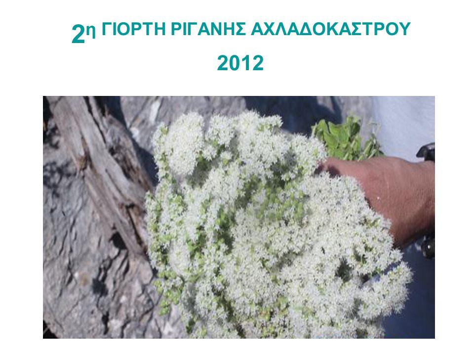 2 η ΓΙΟΡΤΗ ΡΙΓΑΝΗΣ ΑΧΛΑΔΟΚΑΣΤΡΟΥ 2012