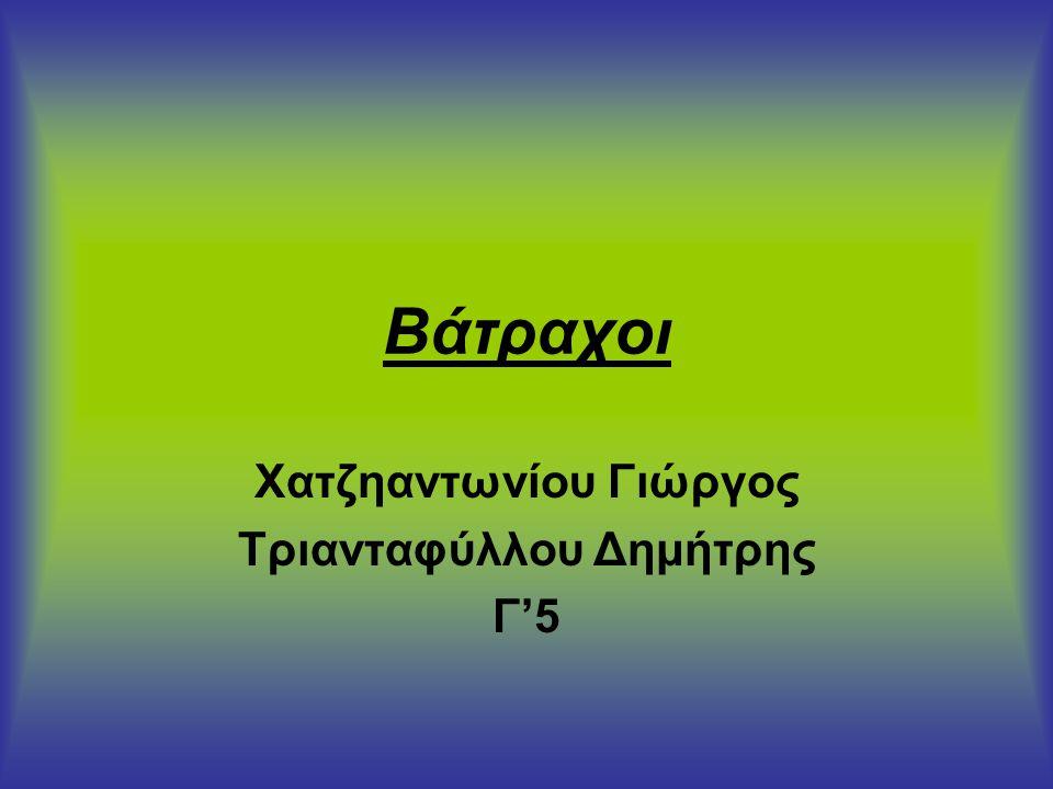 Βάτραχοι Χατζηαντωνίου Γιώργος Τριανταφύλλου Δημήτρης Γ'5
