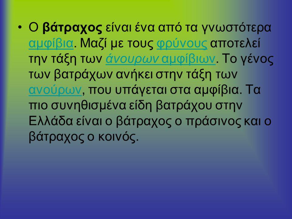 Μορφολογία •Το σώμα του βατράχου μπορεί να χωριστεί σε δύο μέρη: στο κεφάλι και τον κορμό.
