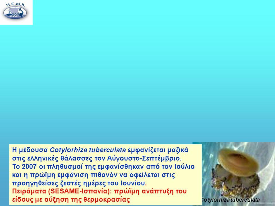 Cotylorhiza tuberculata Η μέδουσα Cotylorhiza tuberculata εμφανίζεται μαζικά στις ελληνικές θάλασσες τον Αύγουστο-Σεπτέμβριο.