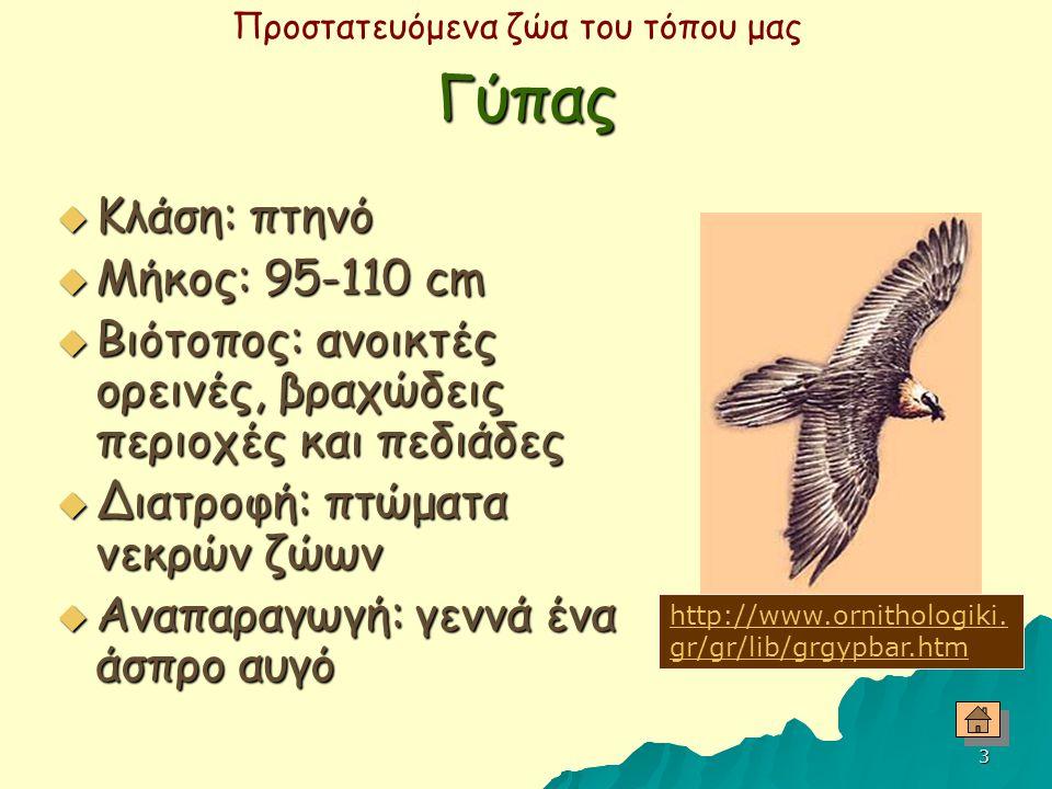 2  Γύπας Γύπας  Κουκουβάγια Κουκουβάγια  Τσαλαπετεινός Τσαλαπετεινός  Φλαμίνγκο Φλαμίνγκο  Χελώνα Χελώνα  Αγρινό Αγρινό  Εξάπλωση των ειδών στη