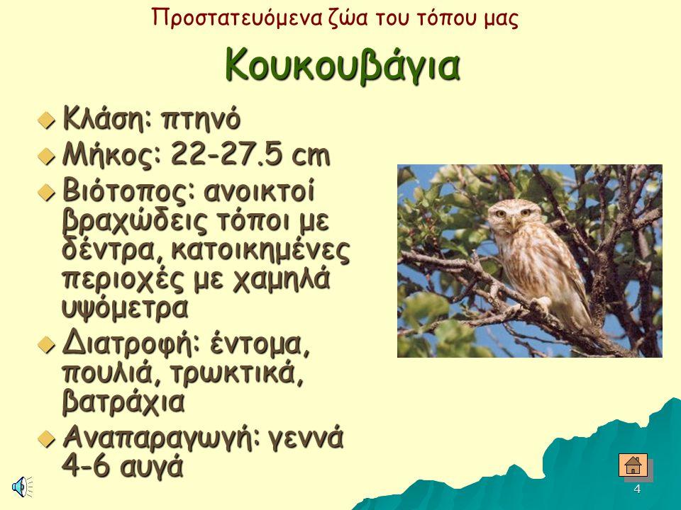 Προστατευόμενα ζώα του τόπου μας 3 Γύπας  Κλάση: πτηνό  Μήκος: 95-110 cm  Βιότοπος: ανοικτές ορεινές, βραχώδεις περιοχές και πεδιάδες  Διατροφή: π