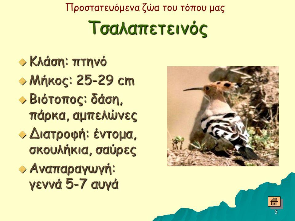 Προστατευόμενα ζώα του τόπου μας 4 Κουκουβάγια  Κλάση: πτηνό  Μήκος: 22-27.5 cm  Βιότοπος: ανοικτοί βραχώδεις τόποι με δέντρα, κατοικημένες περιοχέ