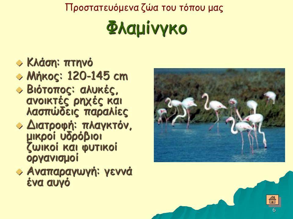 Προστατευόμενα ζώα του τόπου μας 5 Τσαλαπετεινός  Κλάση: πτηνό  Μήκος: 25-29 cm  Βιότοπος: δάση, πάρκα, αμπελώνες  Διατροφή: έντομα, σκουλήκια, σα
