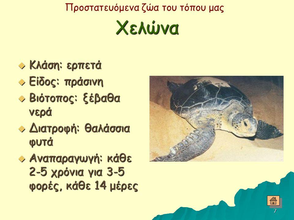 Προστατευόμενα ζώα του τόπου μας 6 Φλαμίνγκο  Κλάση: πτηνό  Μήκος: 120-145 cm  Βιότοπος: αλυκές, ανοικτές ρηχές και λασπώδεις παραλίες  Διατροφή: