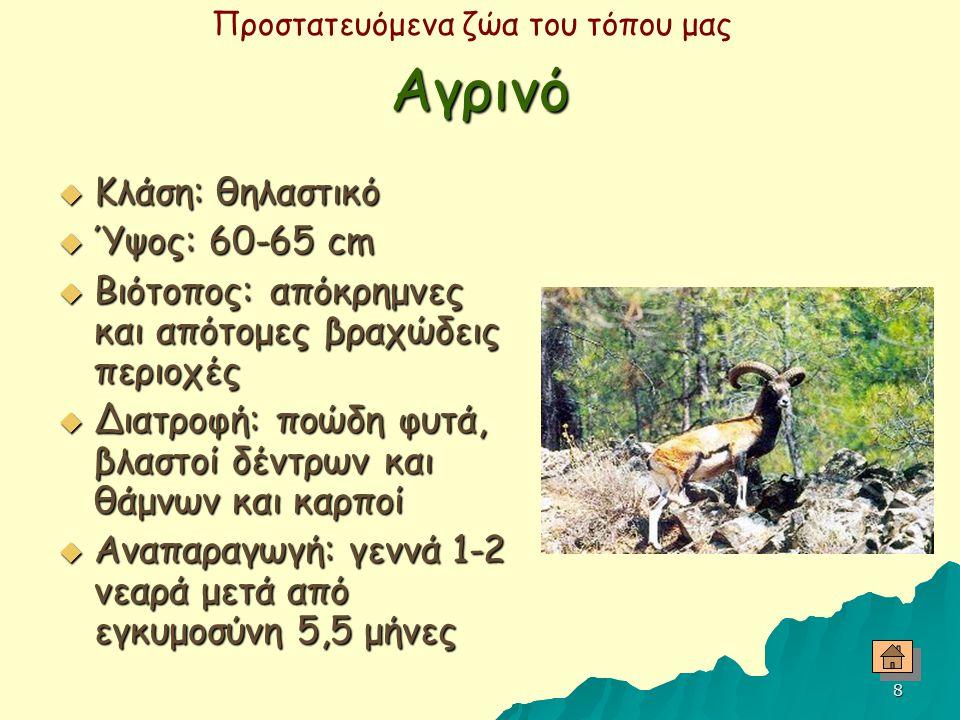 Προστατευόμενα ζώα του τόπου μας 7 Χελώνα  Κλάση: ερπετά  Είδος: πράσινη  Βιότοπος: ξέβαθα νερά  Διατροφή: θαλάσσια φυτά  Αναπαραγωγή: κάθε 2-5 χ