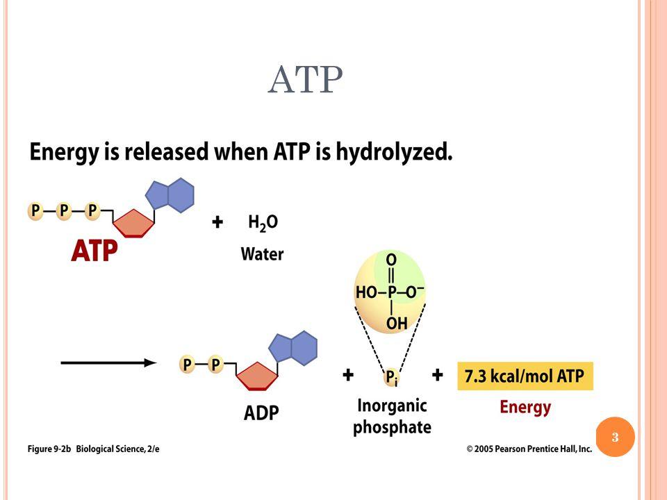 ATP 3