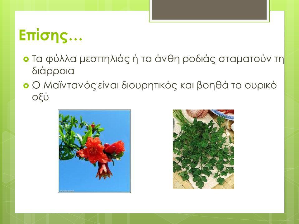 Επίσης…  Τα φύλλα μεσπηλιάς ή τα άνθη ροδιάς σταματούν τη διάρροια  Ο Μαϊντανός είναι διουρητικός και βοηθά το ουρικό οξύ