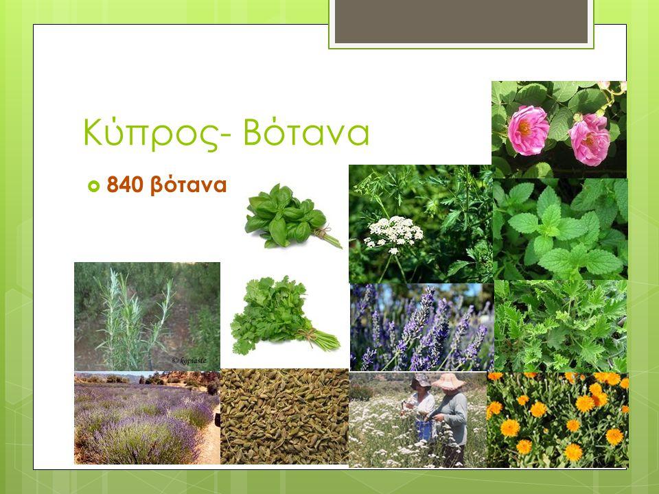 Κύπρος- Βότανα  840 βότανα
