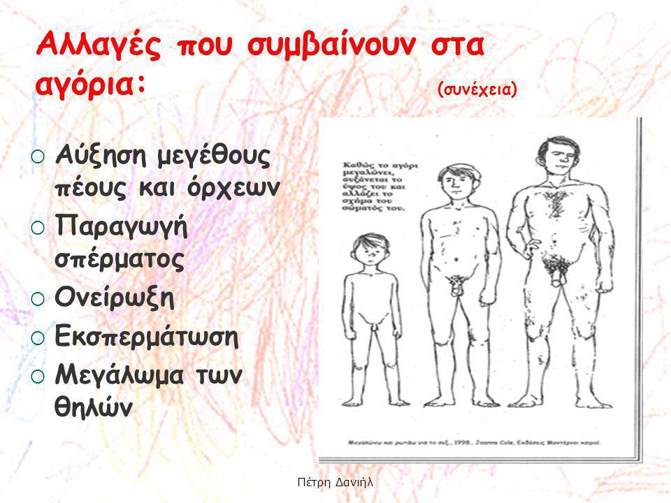 Αύξηση μεγέθους πέους και όρχεων  Παραγωγή σπέρματος  Ονείρωξη  Εκσπερμάτωση  Μεγάλωμα των θηλών Αλλαγές που συμβαίνουν στα αγόρια: (συνέχεια) Π