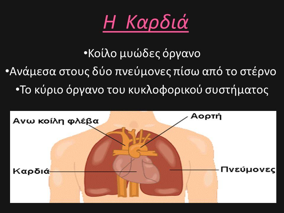 Η Καρδιά • Κοίλο μυώδες όργανο • Ανάμεσα στους δύο πνεύμονες πίσω από το στέρνο • Το κύριο όργανο του κυκλοφορικού συστήματος