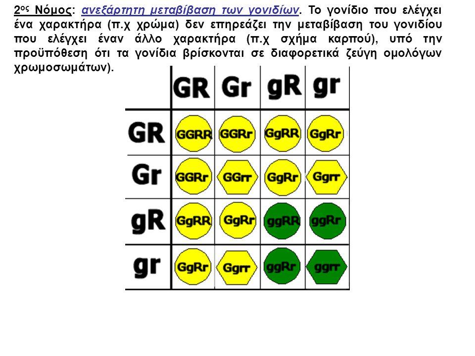 2 ος Νόμος: ανεξάρτητη μεταβίβαση των γονιδίων. Το γονίδιο που ελέγχει ένα χαρακτήρα (π.χ χρώμα) δεν επηρεάζει την μεταβίβαση του γονιδίου που ελέγχει