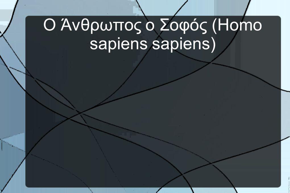 Ο Άνθρωπος ο Σοφός (Homo sapiens sapiens)