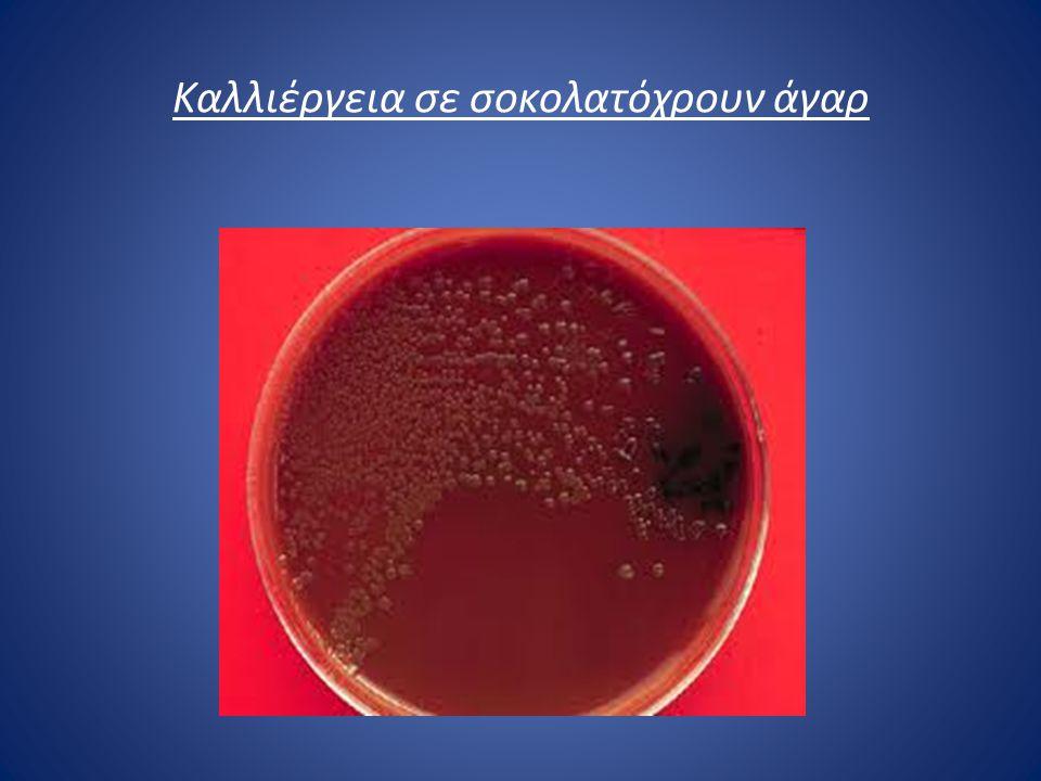 Θεραπεία Η θεραπεία βασίζεται στην άμεση χορήγηση αντιβιοτικών, πριν ακόμα ληφθούν τα αποτελέσματα της εξέτασης.