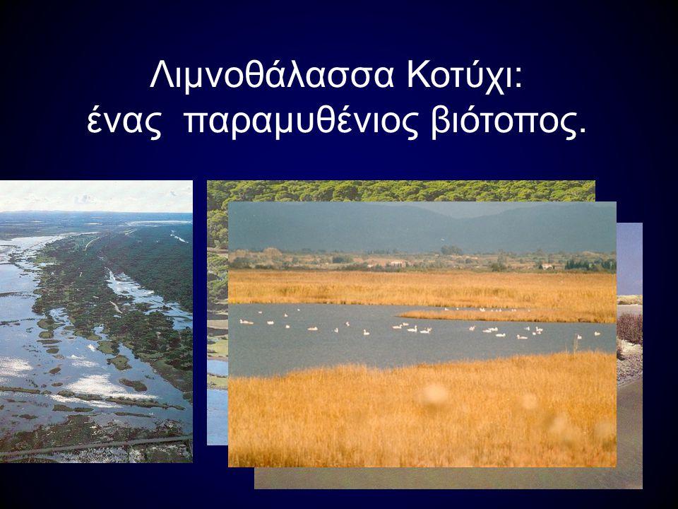 Ανάμεσα στα πουλιά της λίμνης είναι και ο ερωδιός Λευκοτσικνιάς Σταχτοτσικνιάς