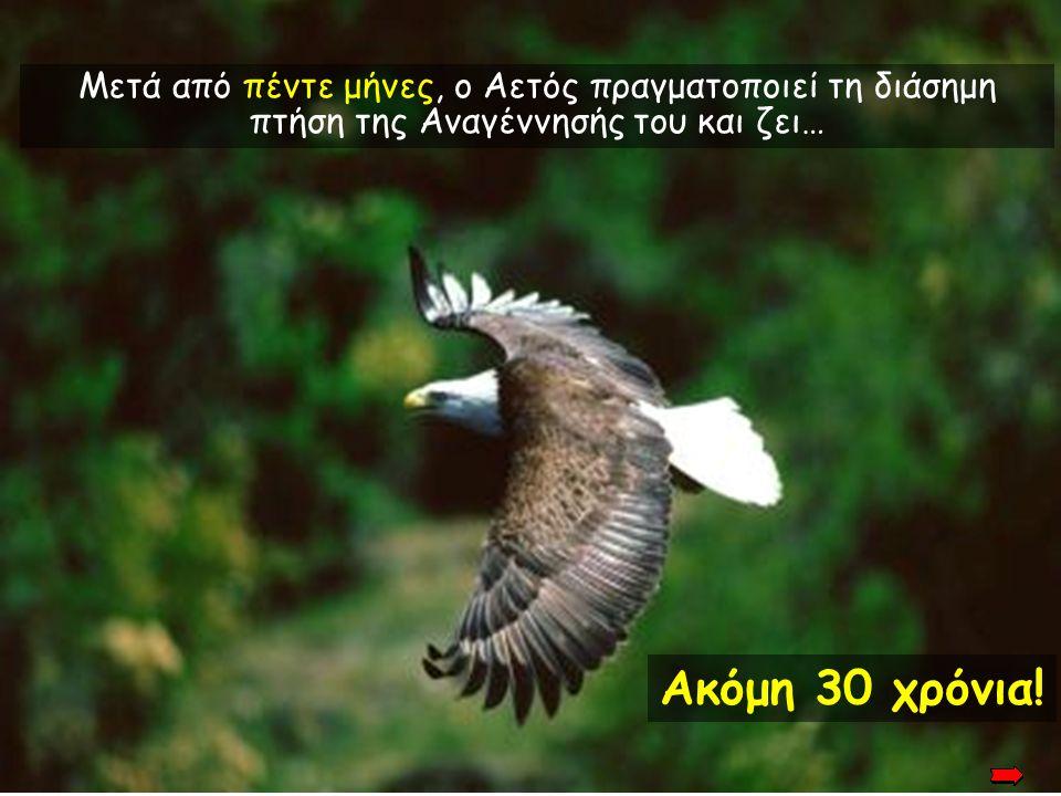 Αφού φυτρώσουν τα καινούργια του νύχια, ο Αετός αρχίζει να μαδάει τα γερασμένα του φτερά. Αφού φυτρώσουν τα καινούργια του νύχια, ο Αετός αρχίζει να μ