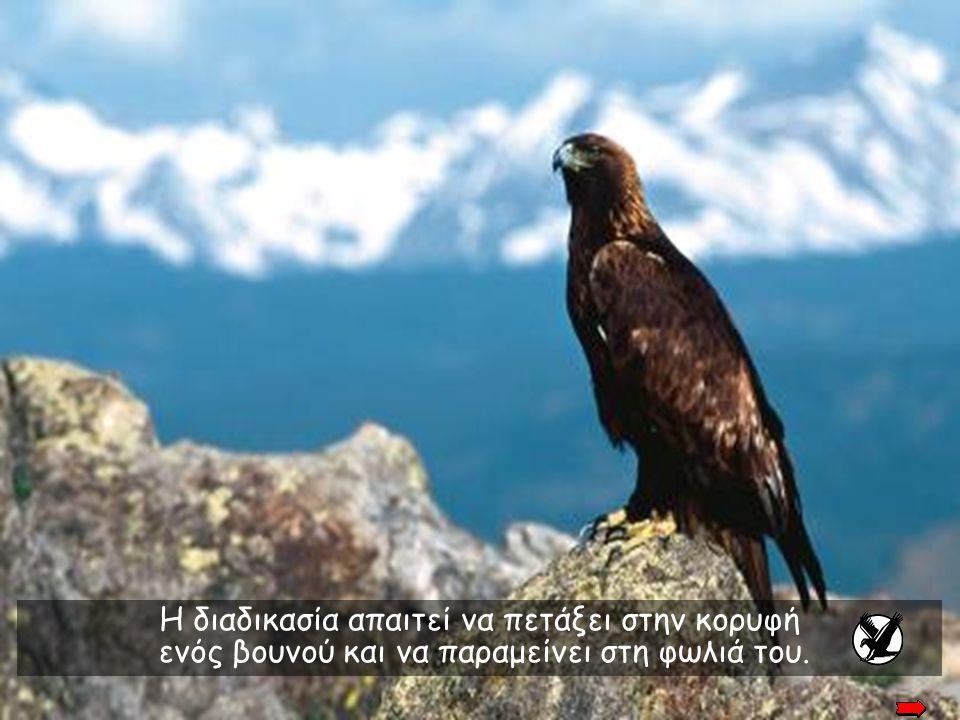 Η διαδικασία απαιτεί να πετάξει στην κορυφή ενός βουνού και να παραμείνει στη φωλιά του.